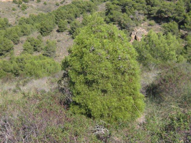 Bosque de ciprés