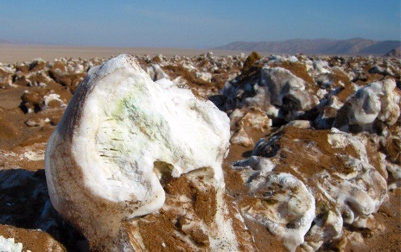 Resultado de imagen de ORGANISMos fotosintéticos en el desierto de atacama