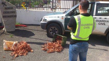 Detenidas seis personas en Montoro por pertenecer a un grupo delictivo que robaba cableado de cobre