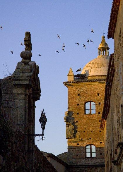 El Festival de la Aves de Cáceres congrega a 7.000 participantes