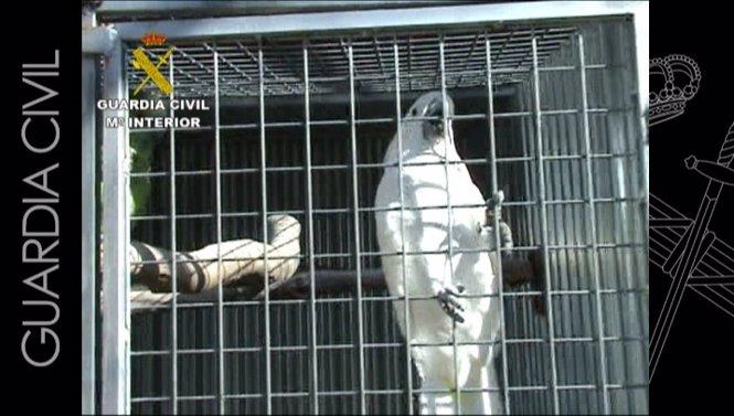 Red tráfico de especies animales en peligro de extinción