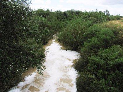 La restauración del arroyo Riopudio llega a Mairena del Aljarafe con una inversión de 1,6 millones