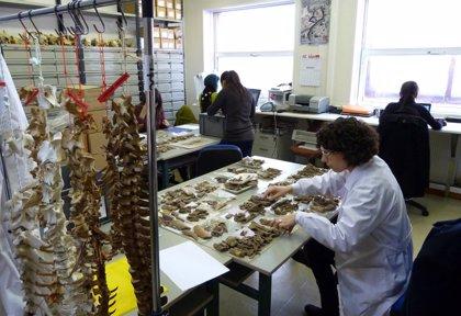 La UC acoge hoy y mañana una reunión científica sobre arqueomalacología