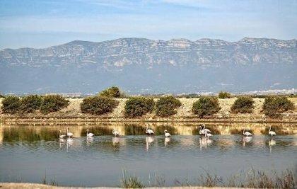 La UE financia el 50% del Plan de Acción Climática del Delta de l'Ebre para proteger la zona