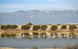 Punta de la banya del Delta del Ebro