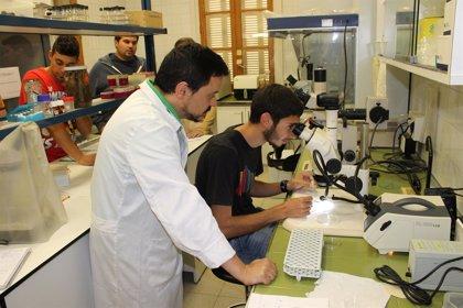 Un grupo de estudiantes de Ingeniería Agroalimentaria de la UIB visita el laboratorio de sanidad vegetal del Govern