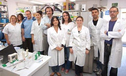 Expertos del H. de Parapléjicos de Toledo avanzan en el control del sistema autoinmune para combatir esclerosis múltiple