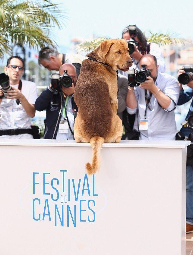 Hagen en el Festival de Cannes
