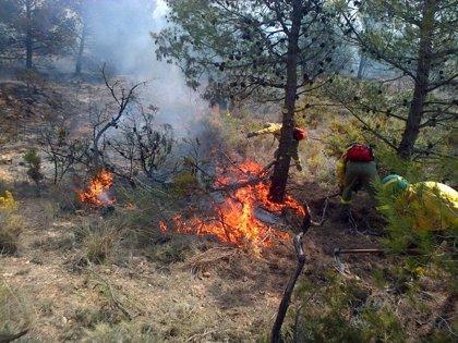 182 detenidos por los incendios forestales en lo que va de año