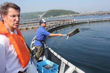 Feijóo anuncia que investigadores japoneses visitarán Galicia para   avanzar proyectos conjuntos de acuicultura