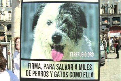 El Refugio pide que no se sacrifiquen animales en las perreras