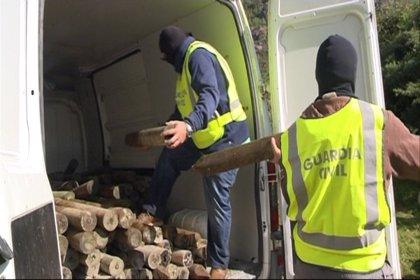 Cuatro detenidos en Oiartzun por enaltecer a ETA plantando un 'Bosque de los Gudaris'