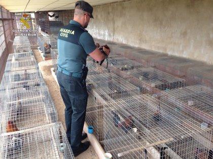 Detenidos dos jóvenes por robar once gallos de pelea de una parcela en Aznalcázar