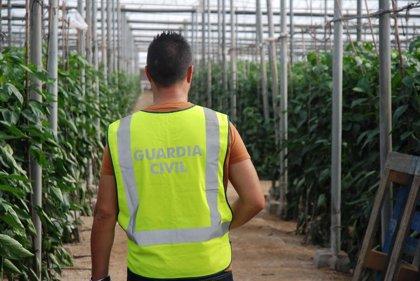 Detenido por el robo de 3.000 kilos de melones en un invernadero