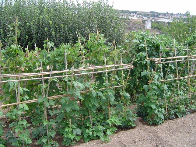 Huerto, hortalizas, verdura