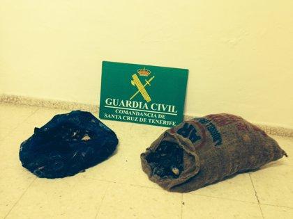 La Guardia Civil incauta 20 kilos de lapas en Buenavista