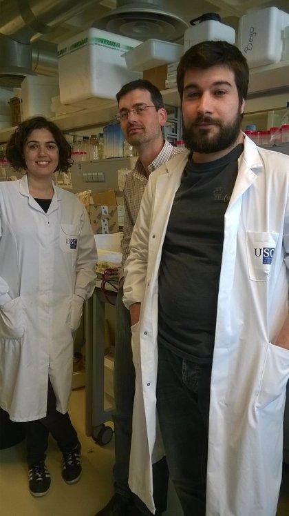 Descubren el mecanismo por el que un fármaco antidiabético disminuye también el peso corporal
