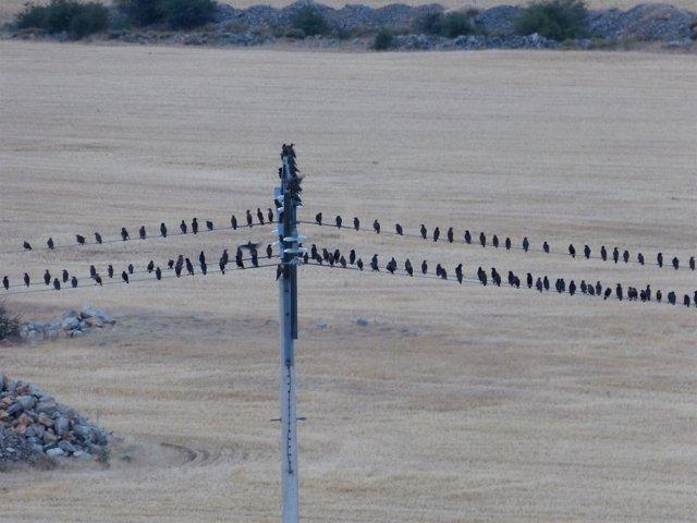 Pájaros posados en una torre y cables eléctricos