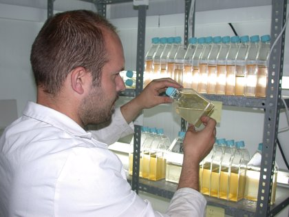 Crean un sistema para cultivar microalgas con propiedades terapéuticas