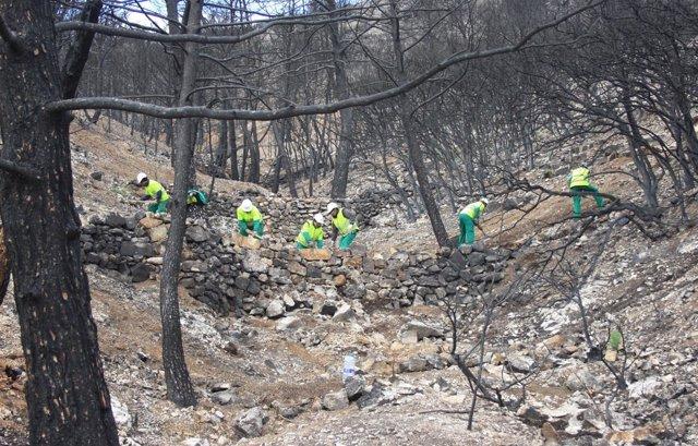 Trabajos de recuperación en el incendio de Andilla
