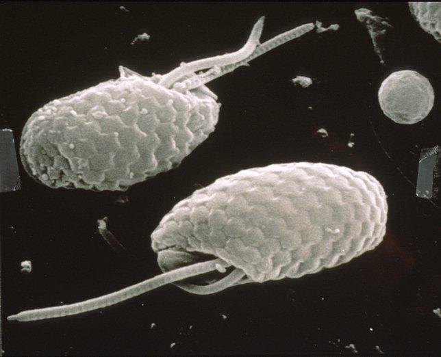 Imagen de criptofitas escaneadas en un microscopio de electrones