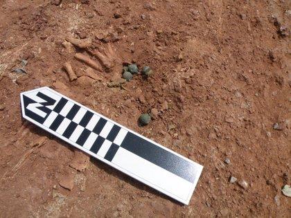 Hallan 10 cascabeles medievales en una tumba infantil