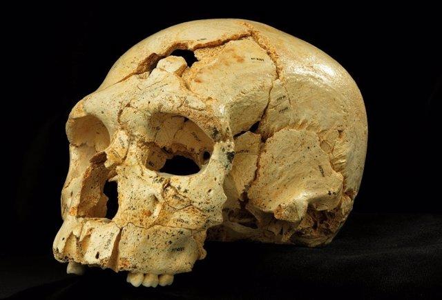 Cráneo encontrado en la Sima de los Huesos