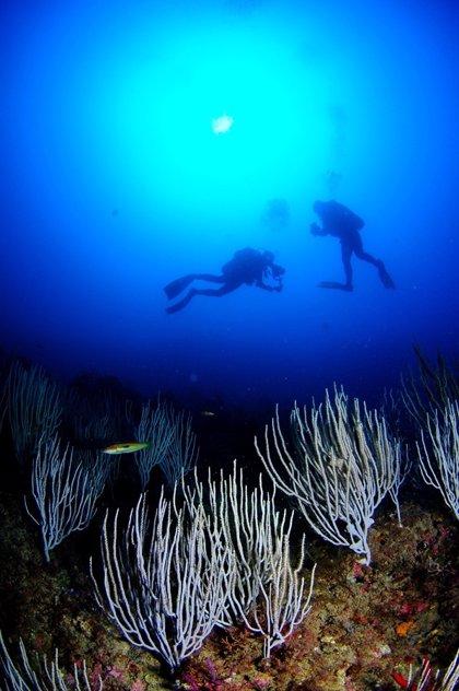 Arrancan las 24 horas de buceo en Cabo de Palos