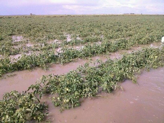 Tomates inundados