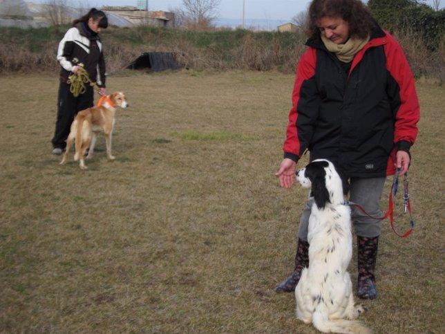 Perros. Dos mujeres en una clase para adiestrar a sus mascotas