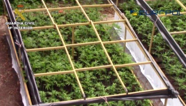 Plantación 'indoor' de producción intensiva