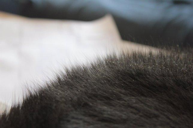 Caspa en el pelo