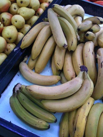 Investigadores canarios estudian la implantación de nuevas variedades de plátano en Canarias