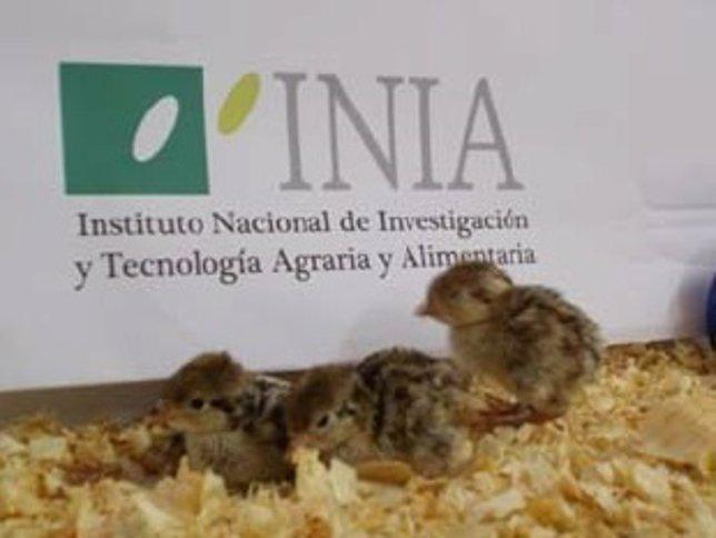 Ejemplares de perdiz roja obtenidos por reproducción asistida