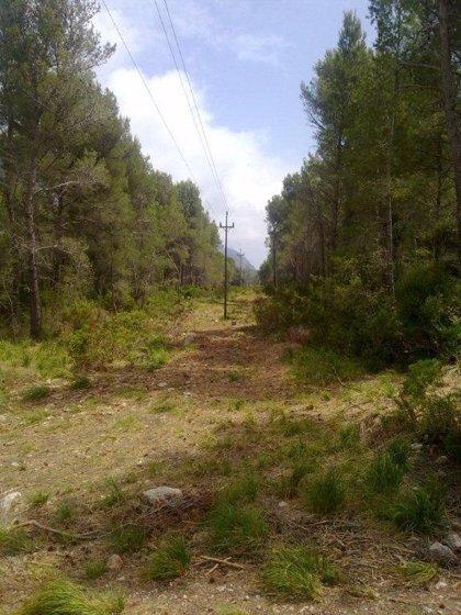 Endesa invierte más de 710.000 euros en trabajos de limpieza forestal cerca de la líneas de distribución de Baleares