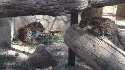 'Baby Boom' en el Safari Madrid en los últimos meses