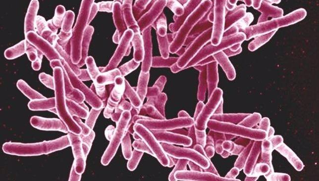 La bacteria 'Mycobacterium tuberculosis'