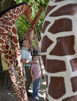 Una de las jirafas que se exponen en el Museo de la Evolución Humana