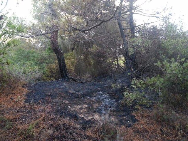 Pinada del Saler afectada por el fuego