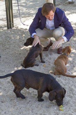 Campaña contra el abandono de animales en Boadilla