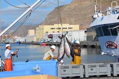 Puertos de Tenerife concentra el 98,4% de las descargas de pescado