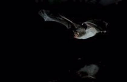 Acuerdan para preservar las minas de galena de Pontons para proteger a los murciélagos