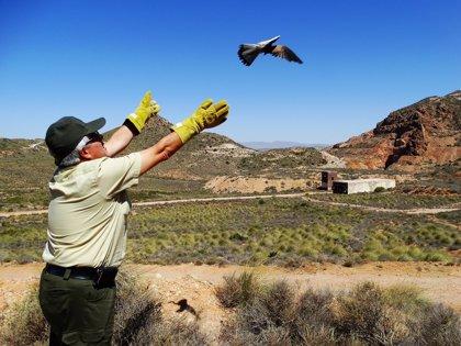 Agentes de Medio Ambiente dejan en libertad a cuatro cernícalos y un búho real en el Parque Cabo de Gata-Níjar