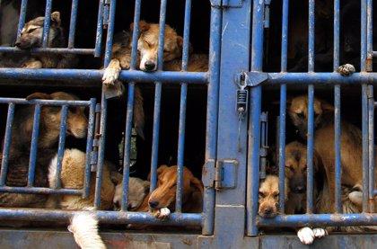 Primer arrestado por maltrato animal en México