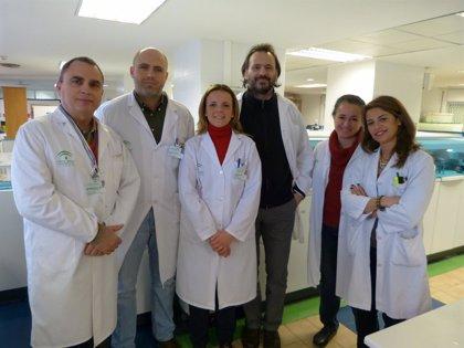 Andalucía-H.Virgen del Rocío ponen en marcha nuevos protocolos para evitar riesgos de transfusión en trasplante hepático