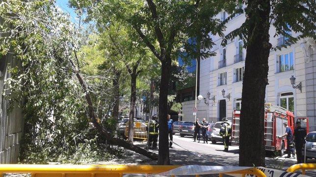 Cae una gigantesca rama junto al Tribunal Supremo