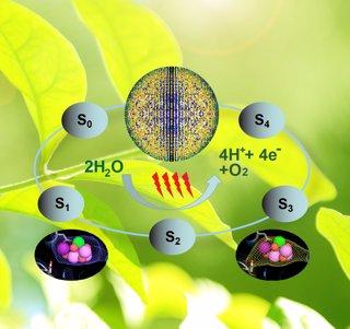 División del agua en la fotosíntesis
