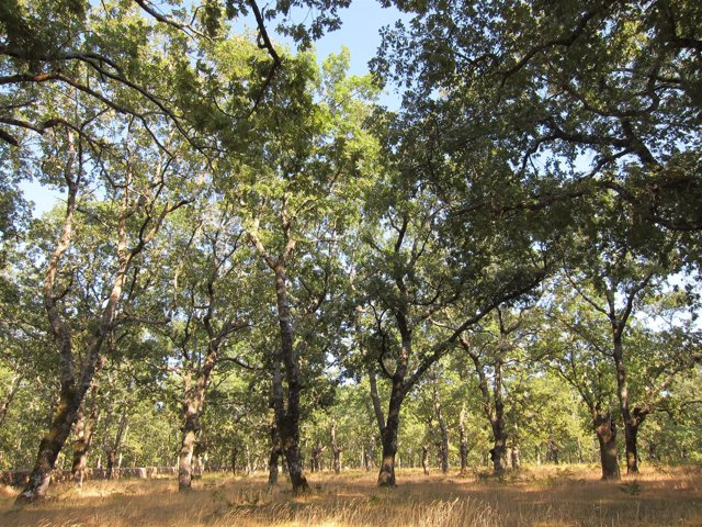 Bosque, árbol, árboles. Madera