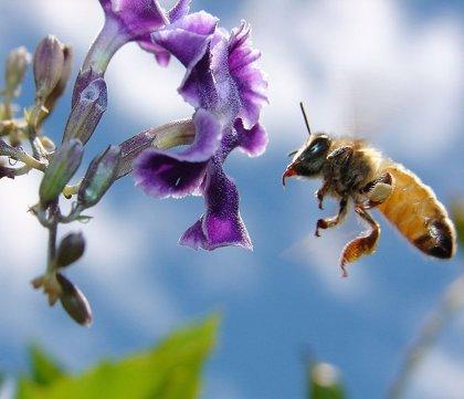 La alergia al veneno de avispas y abejas es la patología alérgica que mejor se cura