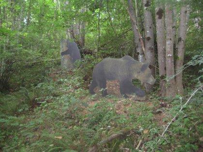 El Parque de la Prehistoria de Teverga acoge la muestra fotográfica 'Los tamaños del oso'